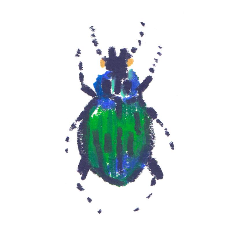 Beetle Calosoma scrutator - N.America.jpg