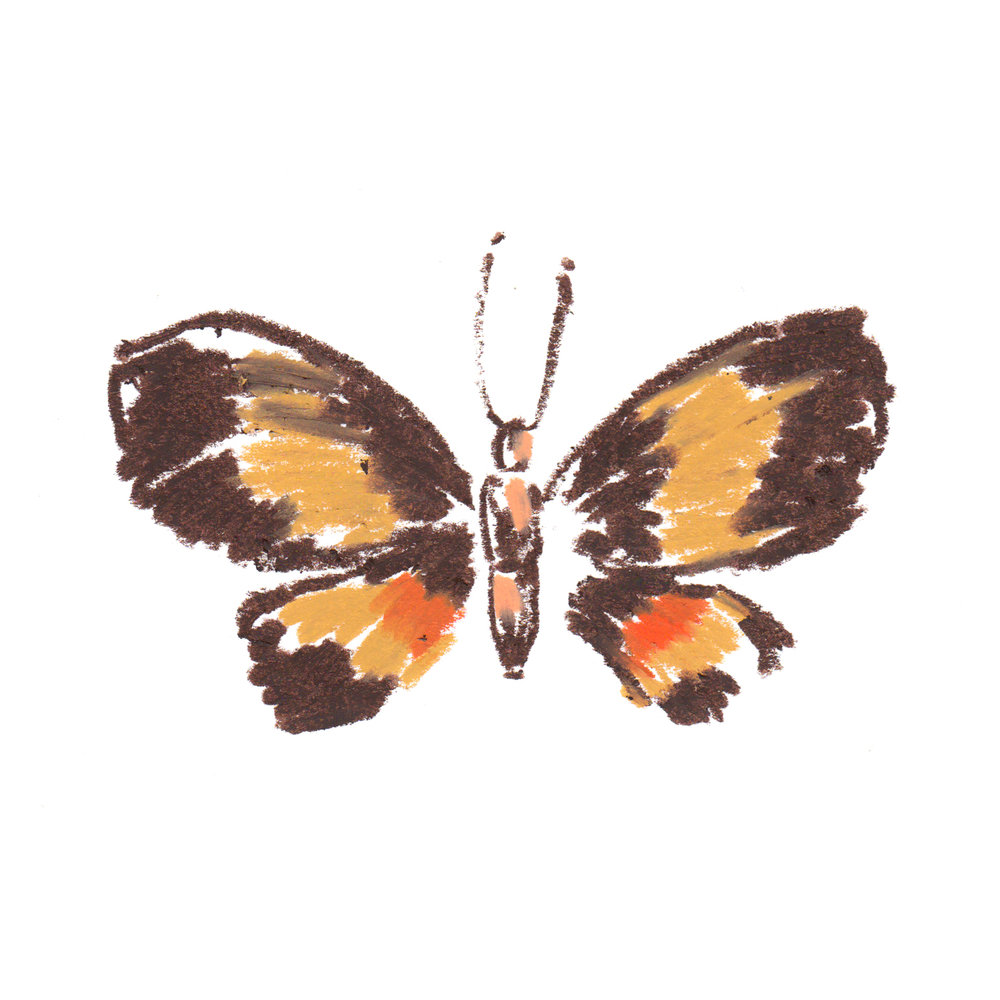 Moth Milionia weiski - Asia.jpg