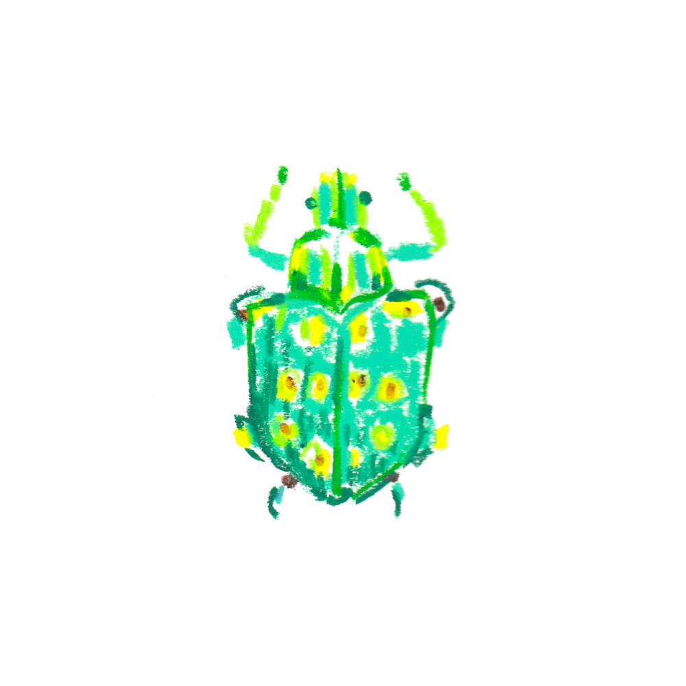 Tree WeevilLamprocyphus germari - SAmerica.jpg
