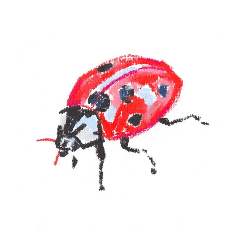 Lady Bug.jpg