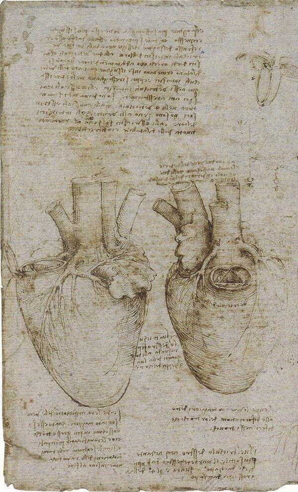 5711a52b845fab99082f06d8ffbfa84f--anatomical-heart-heart-art.jpg