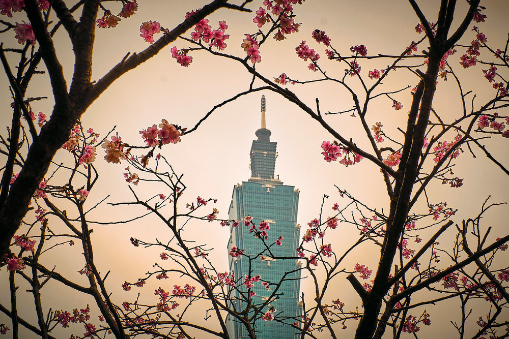 Taipei 101 and cherry blossoms. Fujifilm XT2 - XF35mmF1.4