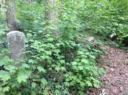 Headstones among green plants and overgrowth