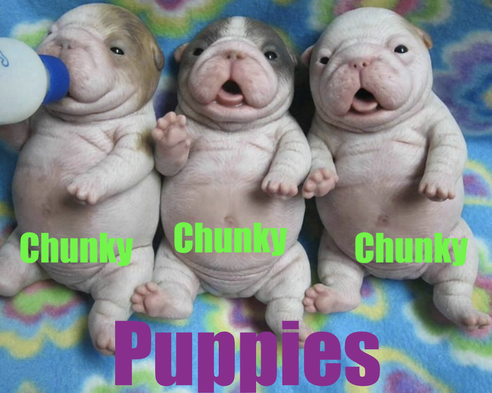 Chunky-Puppies-Art.png
