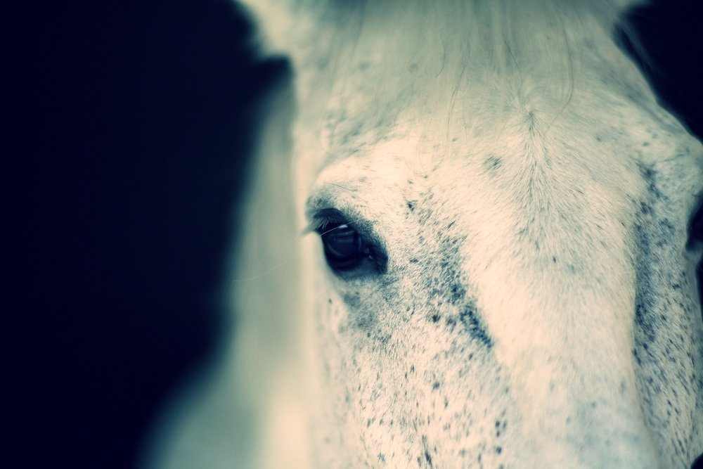 horse-2373459.jpg