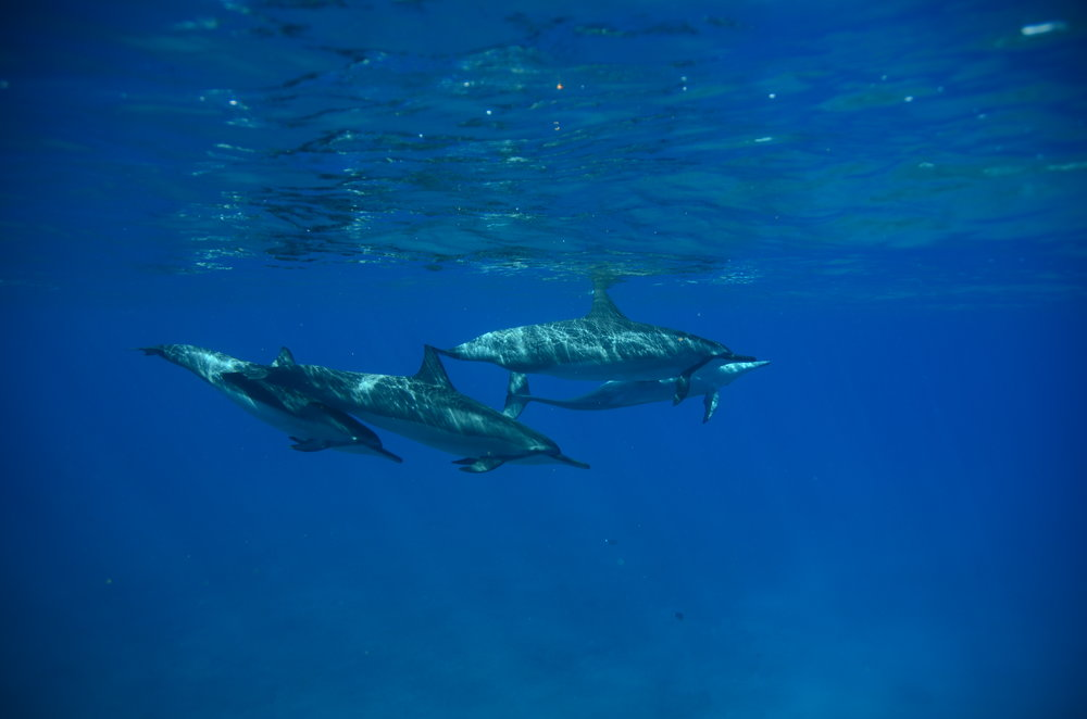 taken by a photographer who joined us on our dolphin tour