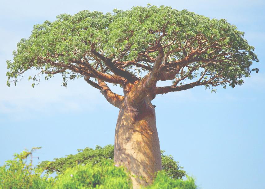 baobab-tree-africa-854x610.jpg