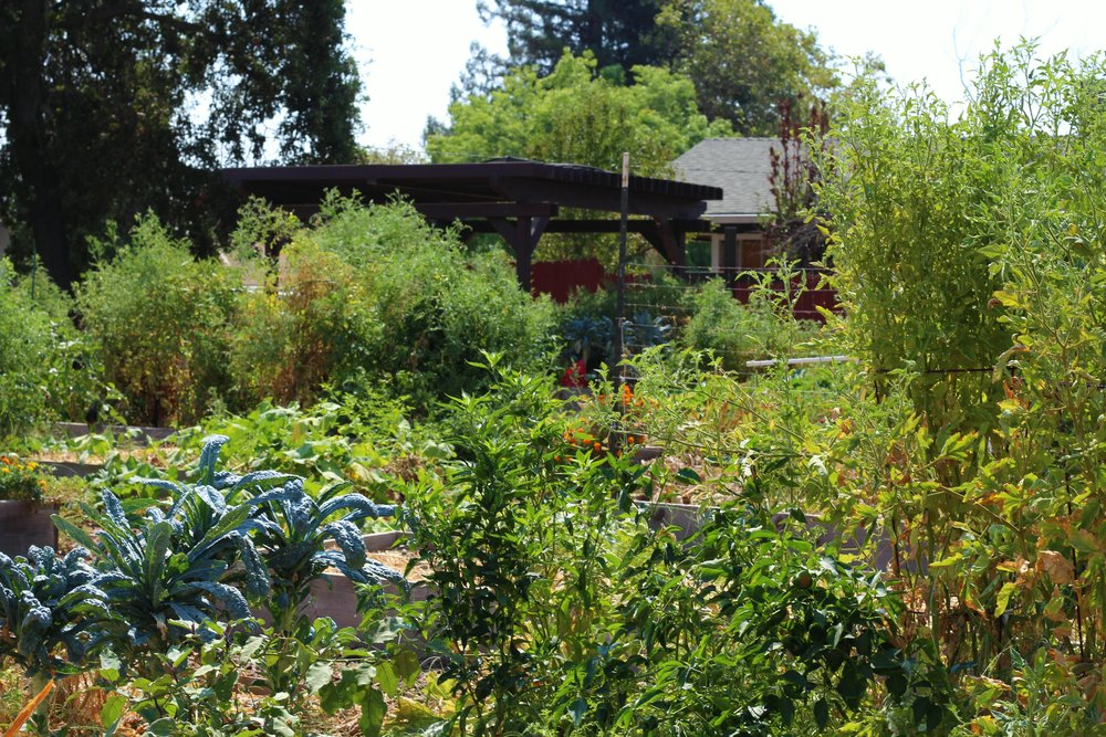 Community Garden — St. James Episcopal Church