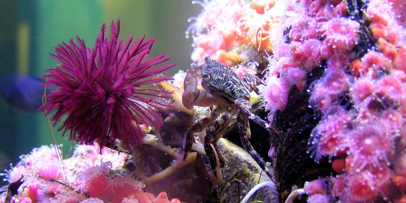 Santamonicaaquarium.jpg