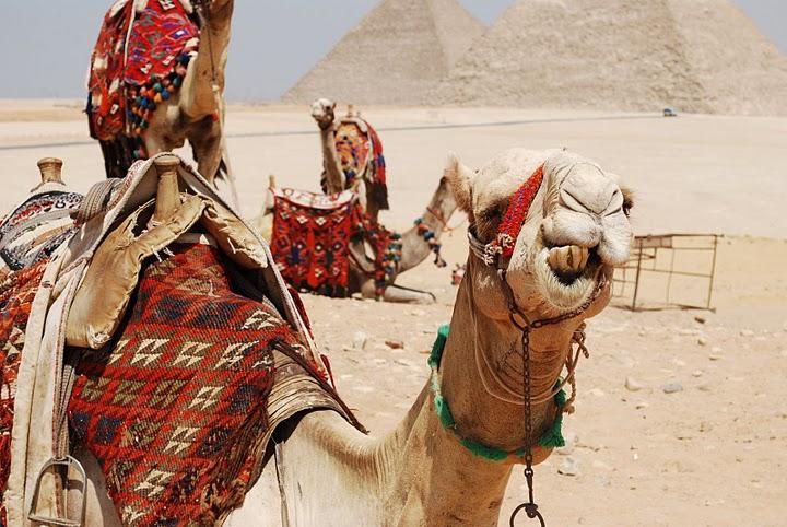 Pyramids Camels.jpg