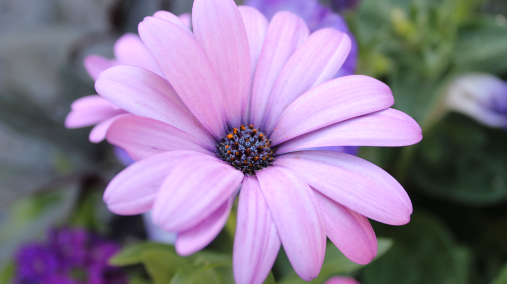 If you like this flower, click on it to expand it. If you have time left in your lunch break, take a minute or two to find some details you didn't see at first.