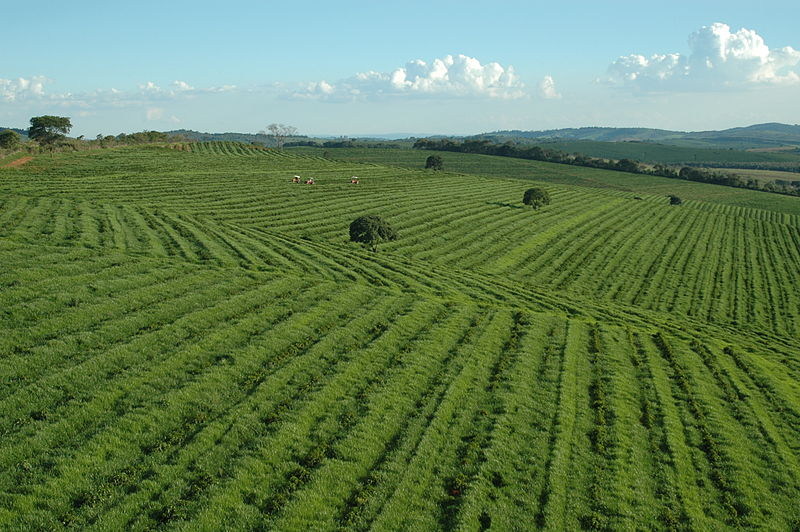 fazenda_Da_Lagoa-minas-gerais-brazil-sun-coffee.jpg