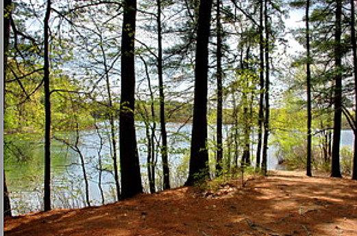 Alice Walden Pond P.jpg