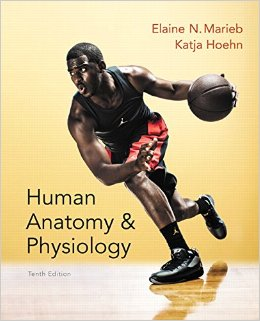 Human Anatomy & Physiology Marieb - Quite basic, but explains concepts very well and can double as an anatomy text. It has lots of great diagrams!In certain subjects you will probably still require more detail in both the physiology and anatomy departments.
