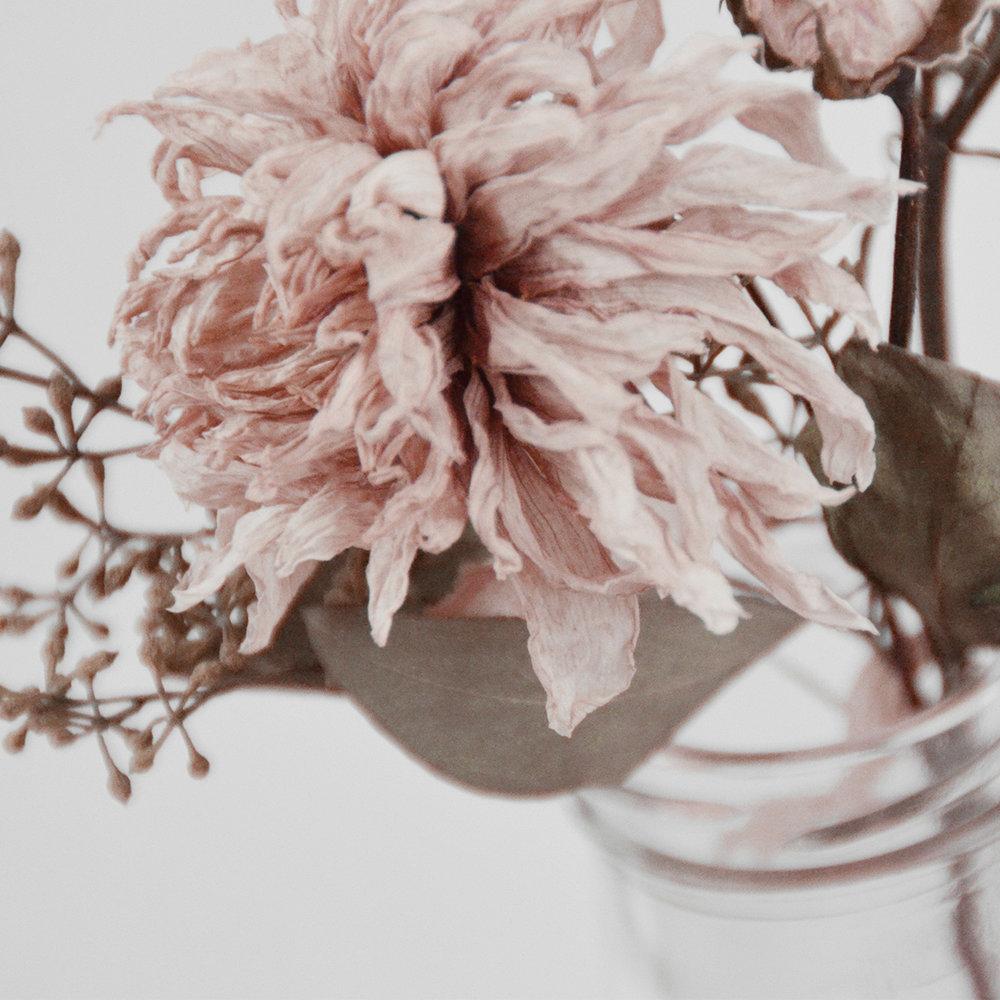 Blush Aesthetics & Photography by KAESPO Design + Branding