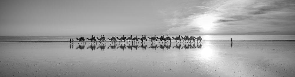 CAMEL RIDE B/W