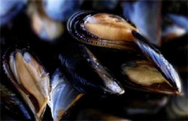 effelle mussles.jpg