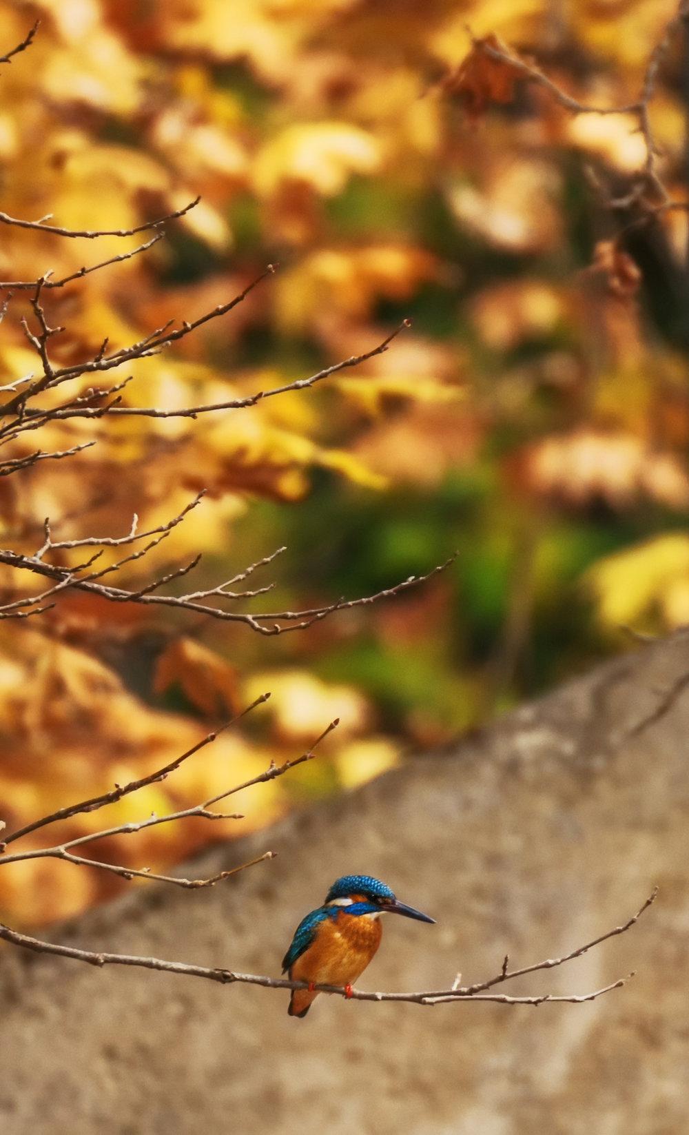 6.1. Blue Bird 2.jpg