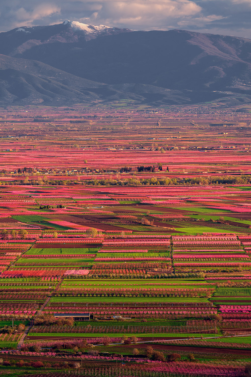 VALLEY OF PINK - VEROIA