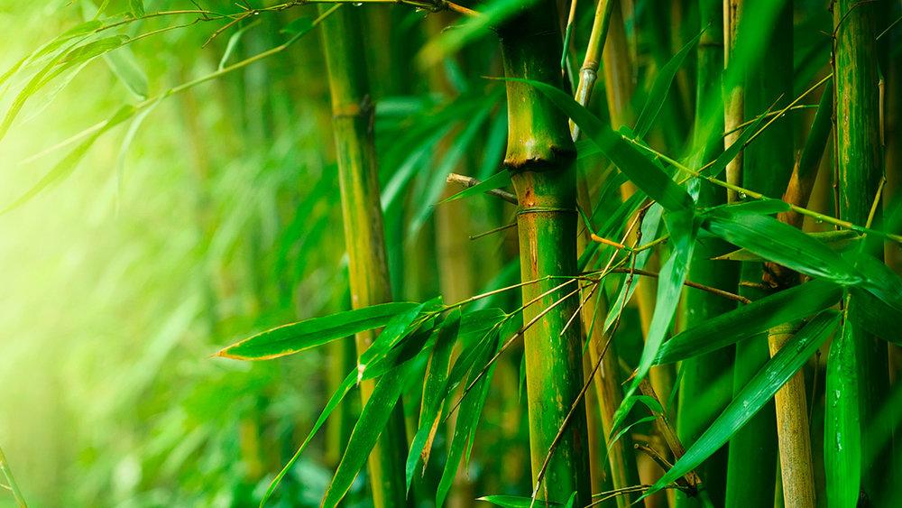 Beyond Bamboo