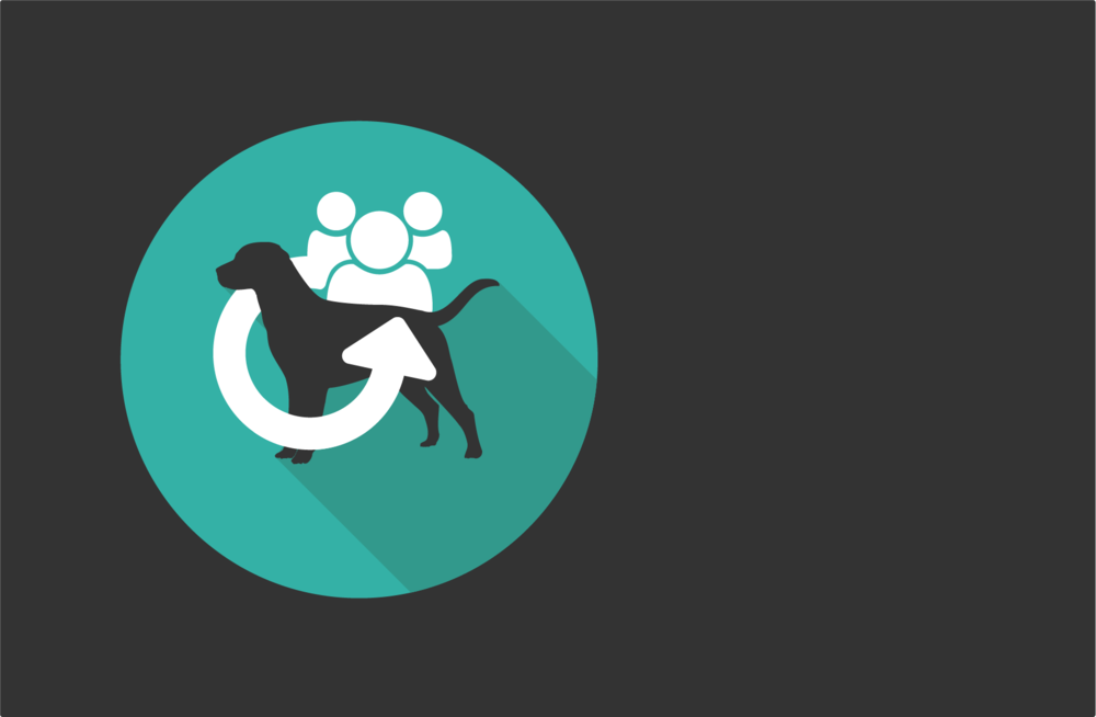 Management - Une organisation managériale (vétérinaire et ASV référents douleur), source d'efficacité et donnant les contours d'un projet d'équipe.