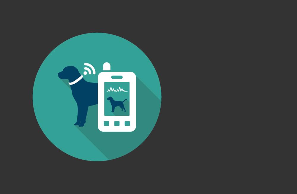 Outils Digitaux - Une évaluation de la douleur optimisée par le développement de monitoring analgésique péri-opératoire et d'outils numériques(web applications, collier connecté).