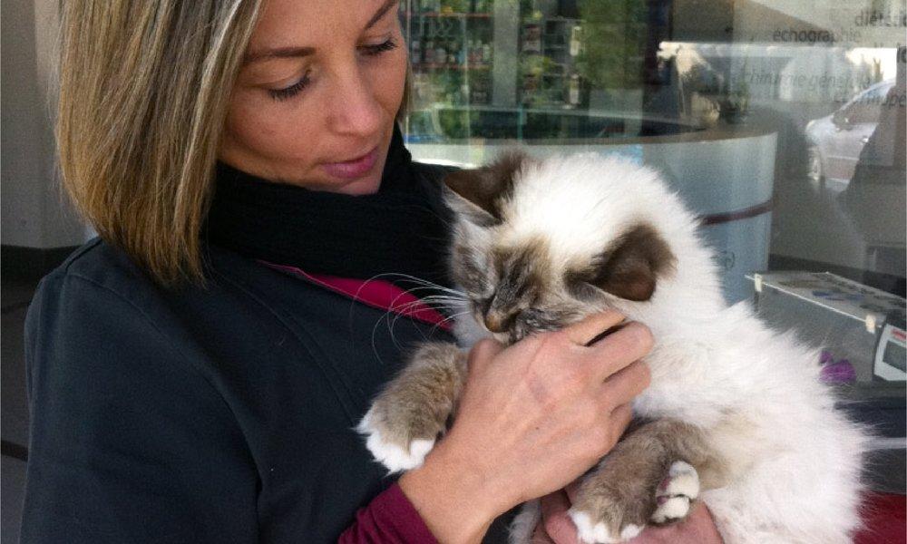 - Elle modifie le management de l'activité quotidienne des vétérinaires