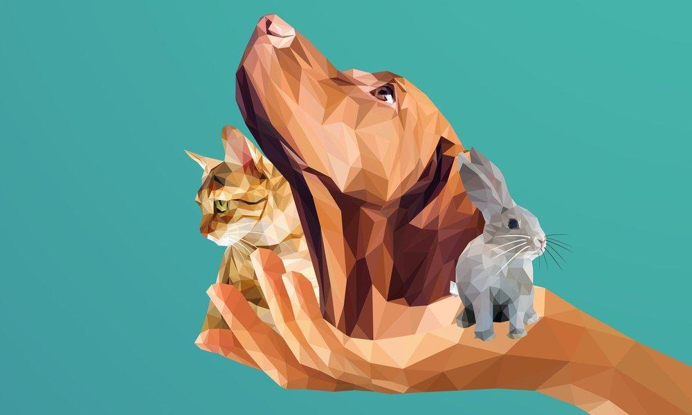 - Le Réseau CAPdouleur est une innovation disruptive, c'est à dire de rupture,par opposition à une innovation incrémentale, qui se contente d'optimiser l'existant.