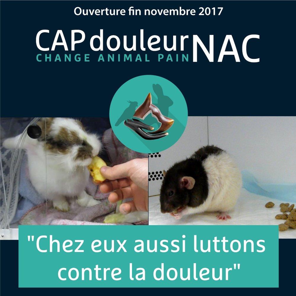 14 NOvembre 2017 - Actualités CAPdouleurNAC.