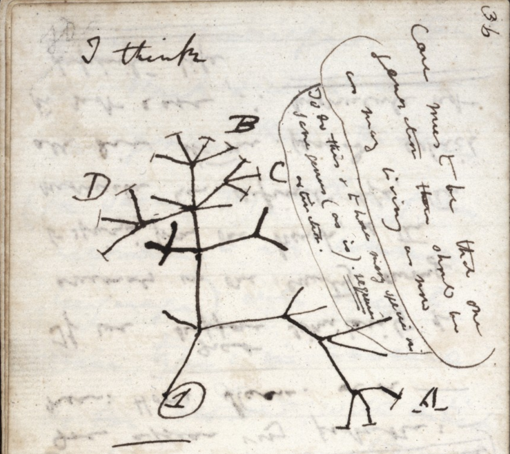 A page from one of Charles Darwin's notebooks.