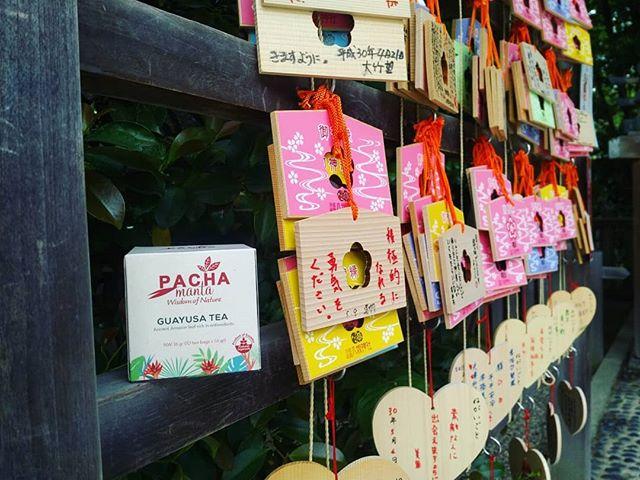 Guayusa Pachamanta tea, the secret of amazonian natives' vitality. . . . #tea #teatime #teaaddict #antioxidants #nutrients #healthylifestyle #naturalliving #spring #springtime #clearmind #energy #balance #skincare #keephealthy #お茶 #日本 #オーガニック #健康 #スキンケア #ナチュラル #春