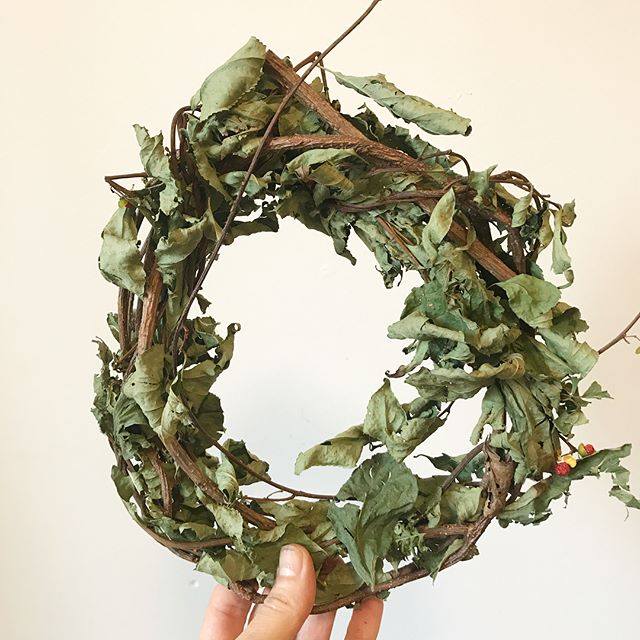 Wreath made from oriental bittersweet an invasive plant harvested by our friends at Agroforegen, farmers who work to conserve, cultivate and restore underutilized forests and agricultural land. They are clearing land to plant ginseng and we're using the invasive plants to develop textile dyes. Colors seen here in order of appearance: hay scented fern, oriental bittersweet and grape vines. More research coming soon! Thank you @woodlandpantry for gathering and preparing these plants #regionalismmatters #regenerativefarming #regenerativetextilesystems #colorsfromnature #plantdyes