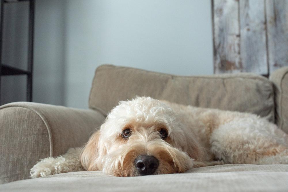 Bear Creative Co, Columbus Photographer, Columbus Ohio, Lifestyle Photographer, In Home Session