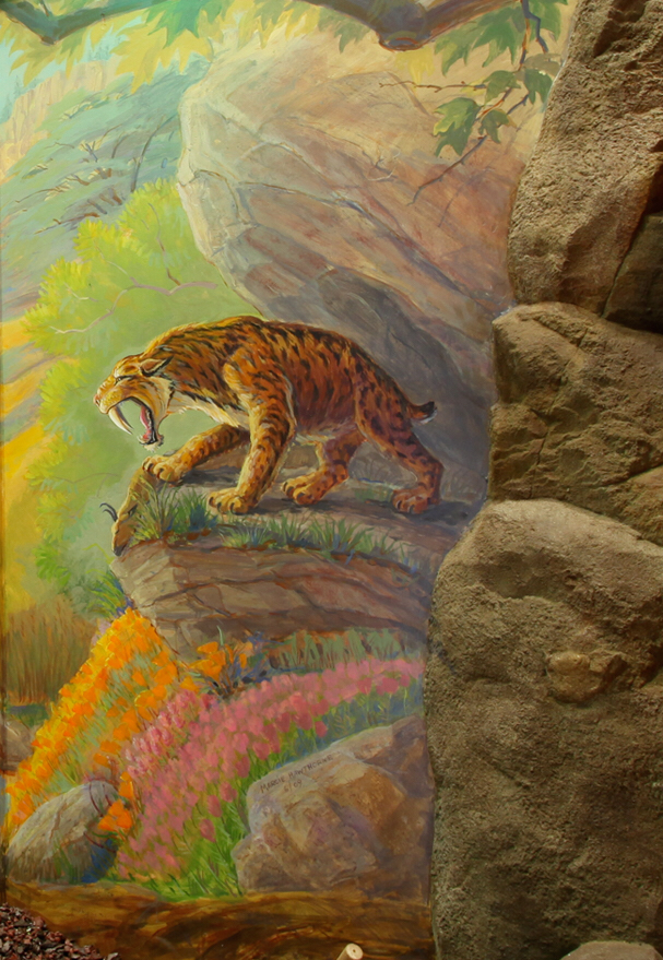 A detail of the original habitat  mural, with the Saber Toothed Cat smaller than in real life, but portrayed in a cave overlooking its prey that mostly became extinct during the Ice Age. Gone are the giant Dyer Wolves, the camels, the striped horses, the mastodons. Still present today are the turtle and birds: the quail, the great blue heron and condor! Isn't this amazing of what life survived the Pleistocene!