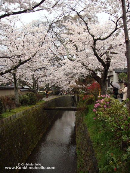 Path of Philosophy during cherry blossom viewing season, Kyoto Japan