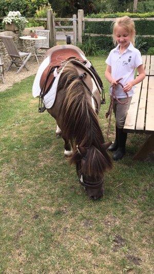hsh+pony.jpg