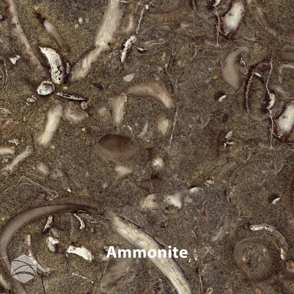 Ammonite_V2_14x14.jpg