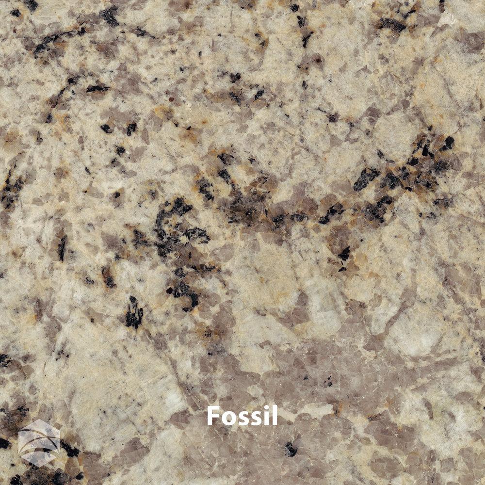 Fossil_V2_14x14.jpg