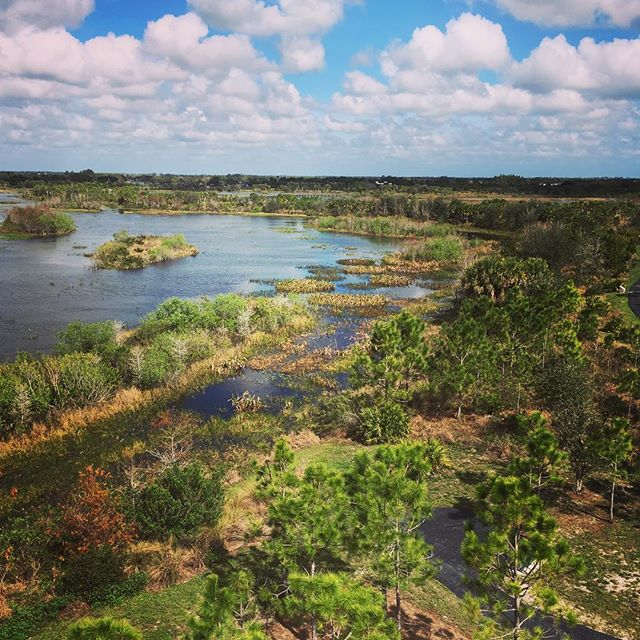 It may be a man-made nature preserve but it is growing up nicely! And having an observation tower to climb makes it even better. #moveyourbody #wellingtonenvironmentalpreserve #floridawetlands