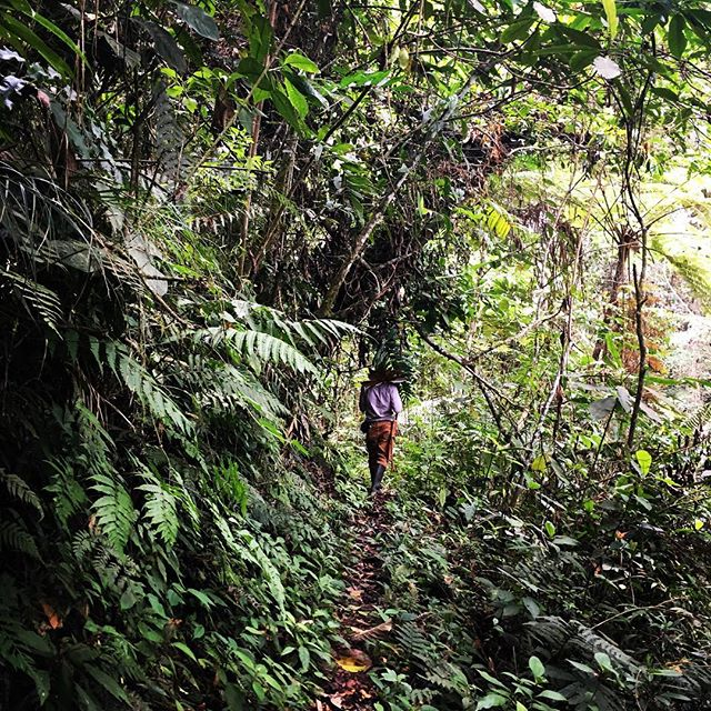 Where is your path taking you? Get out and breathe in nature for all it's got. #hikingfeedsmysoul #valledelcauca #moveyourbody