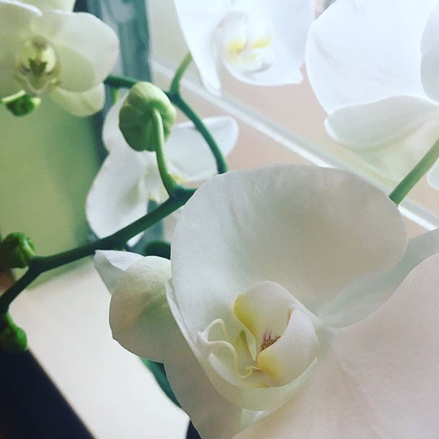 The office orchids are all blooming again. Spring in Florida is so lovely. #findbeautyeverywhere #natureislit #beautysparksjoy