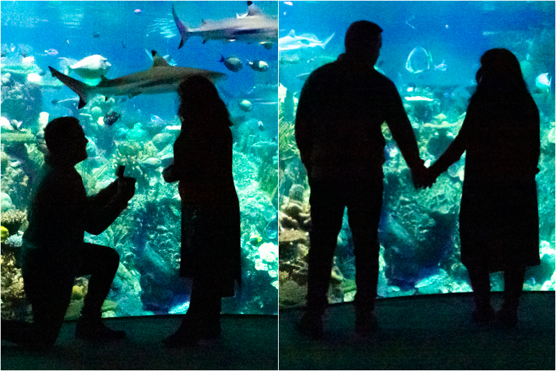 National Aquarium Baltimore proposal silhouette.jpg