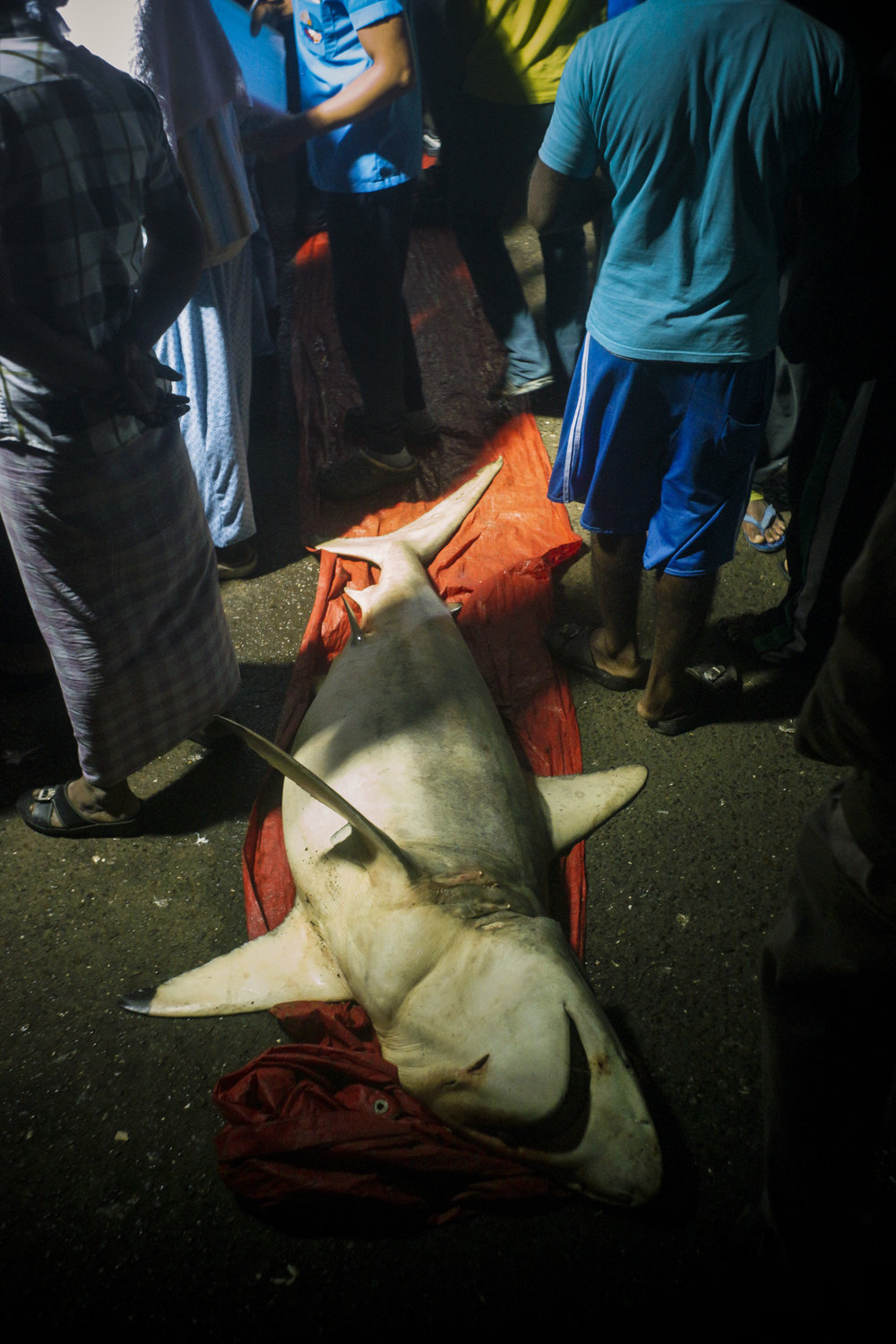 A freshly caught shark is auctioned off.