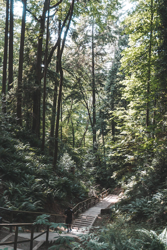 There are approximately 11,000 planted trees and over 10,000 native trees in their natural settings on the campus. (UBC)