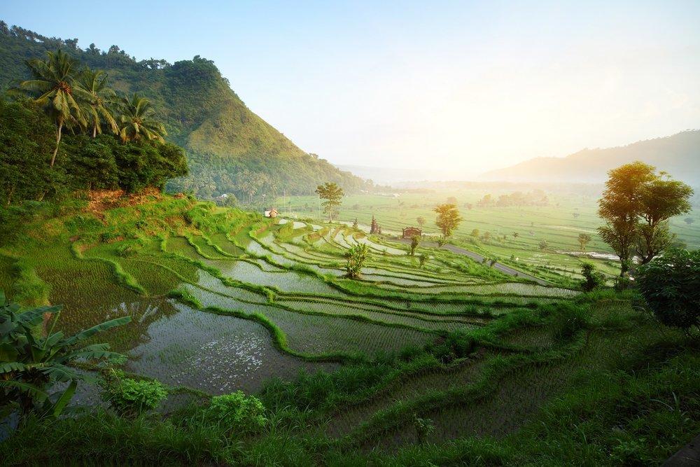 3-shutterstock_73699444-Rice-tarrace-in-mountains.-Bali.-Indonesia.jpg