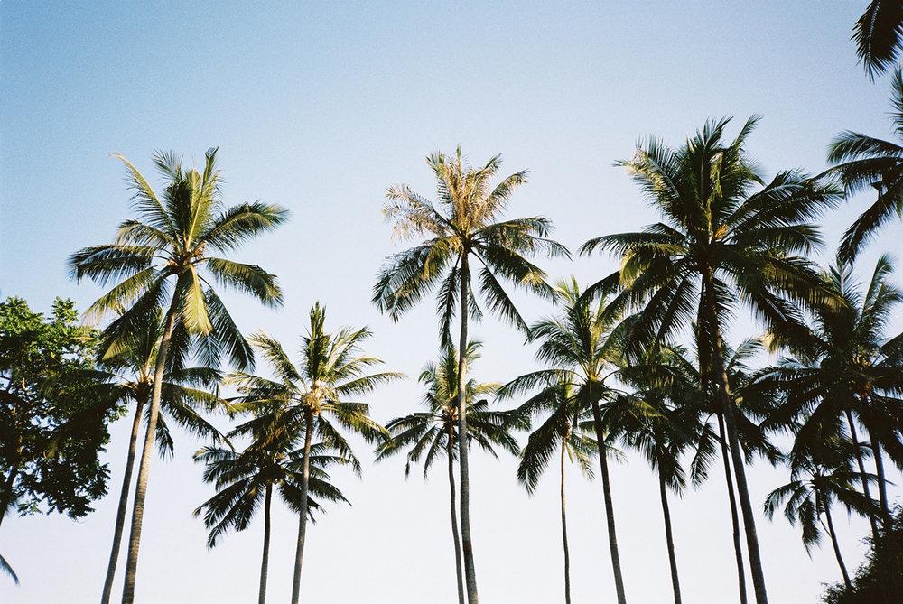 nick-lawrence_palm-trees_img01_1500.jpg