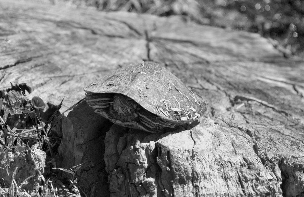 Shy Easter Turtle.jpg