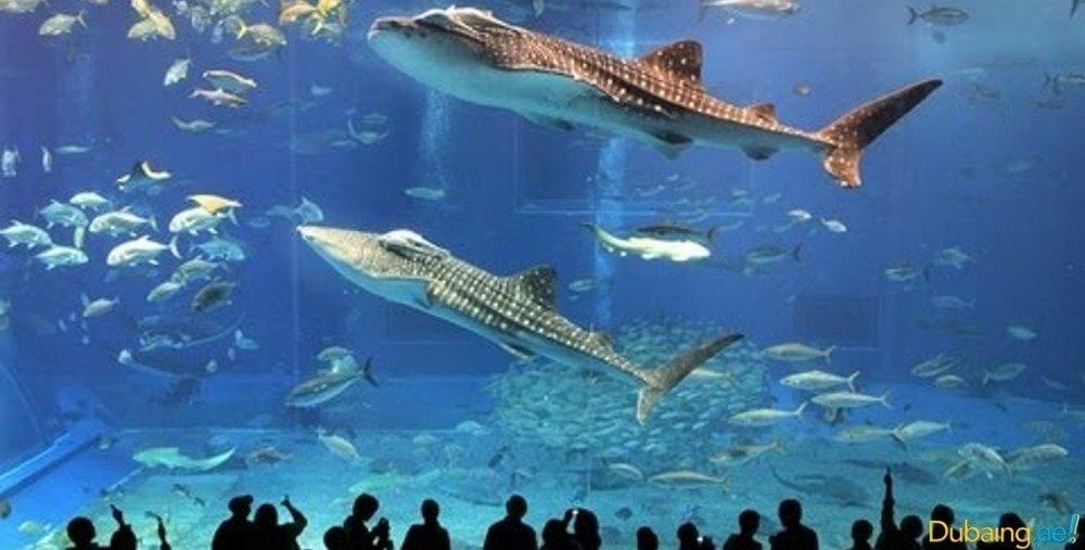 aquariums3.jpg