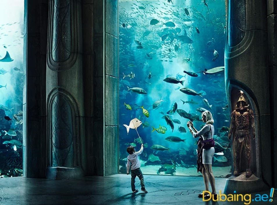 aquariums4.jpg