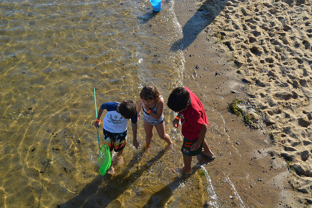Some kiddos standing in shallow ocean examining shells